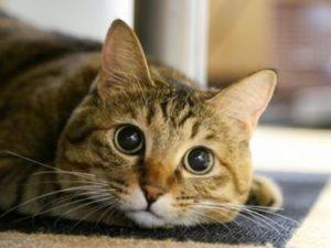 くりくり目の猫ちゃん